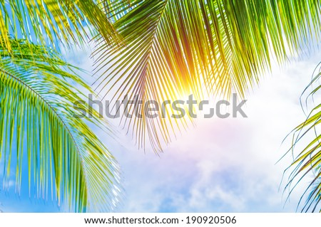 Fresh green palm tree leaves border on blue cloudy sky background, sunny day, beautiful natural wallpaper, summer holidays concept - stock photo
