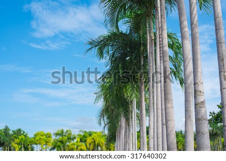 Fresh green palm tree leaves border on blue cloudy sky background, sunny day, beautiful natural wallpaper, summer holidays concept