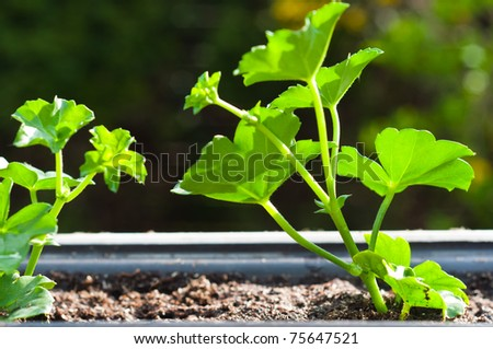 Fresh green plant in pot - stock photo