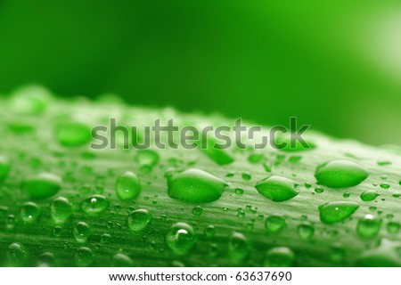 fresh green plant leaf with water drops close up - stock photo