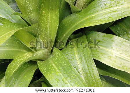 Fresh green plants with water droplets in the morning dew