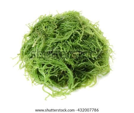 fresh green seaweed - stock photo