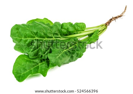 fresh green spinach with root on white background