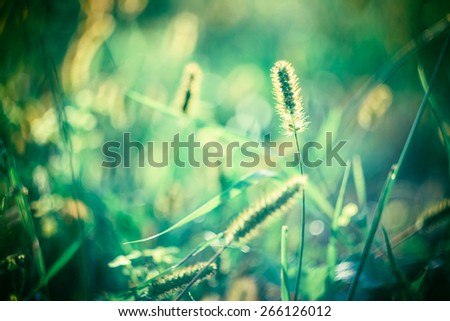 Fresh Green Summer Grass Meadow Close-Up With Bright Sunlight. Sunny Spring Background blur - stock photo
