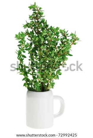 Fresh green thyme bunch in small ceramic noggin, isolated on white