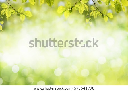 Fresh Green Tree Leaves Frame Natural Foto de stock (libre de ...