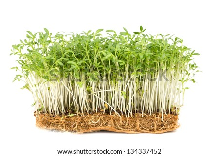 Fresh green watercress on a  white backgrounds - stock photo