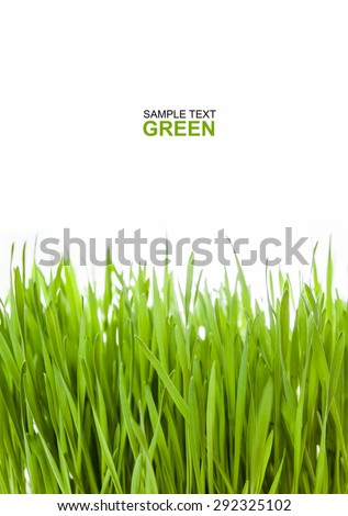fresh green Wheat grass on white background. Macro with extremely shallow dof. Green leaves for cover vertically and for copy space - stock photo
