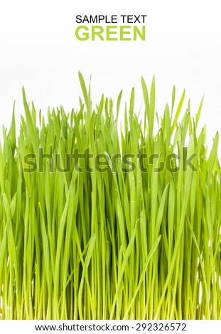 fresh green Wheat grass on white background. Macro with extremely shallow dof.Green leaves for cover vertically and for copy space - stock photo