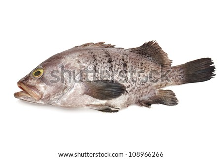 Fresh Grouper on white background - stock photo