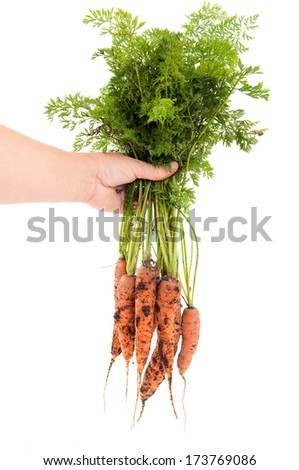 Fresh harvested carrots from the house garden - stock photo