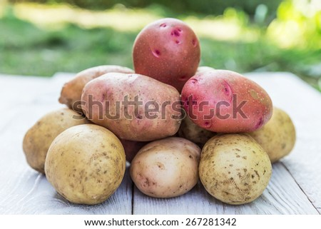 Fresh harvested potatoes spilling out of a burlap bag - stock photo
