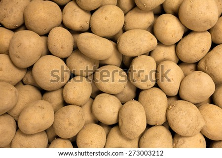Fresh harvested yellow potato tubers - stock photo