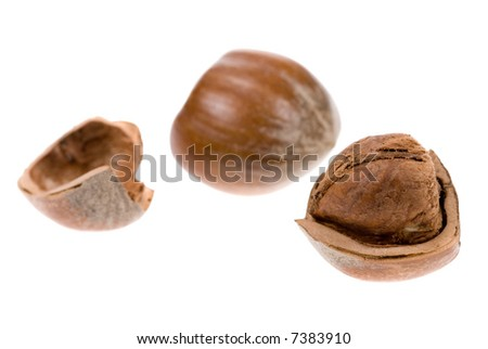 fresh hazelnuts isolated on a white background