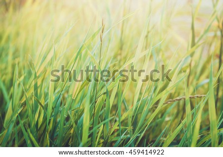 Fresh healthy green bio grass background with abstract blurred foliage, bright summer sunlight. Copyspace for your text or advertisment. Rustic style nature. Text, copy space. - stock photo