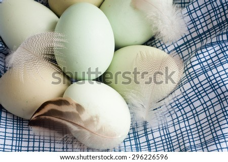 Fresh hens eggs in a blue and white cloth with some feathers. - stock photo