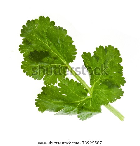 fresh herb  isolated on white - stock photo