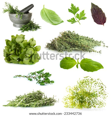 Fresh herbal collage - stock photo
