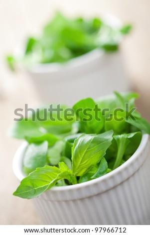 fresh herbs - stock photo