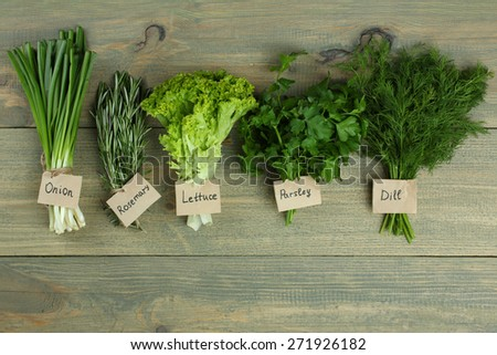Fresh Herbs Collection is Hanging and Wooden texture / Vintage Style - stock photo