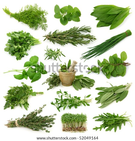 Fresh herbs collection isolated on white background - stock photo
