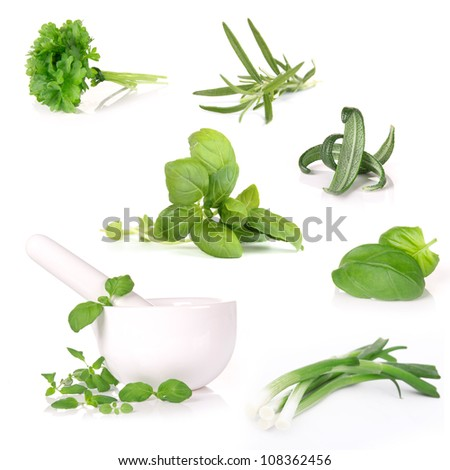 Fresh herbs collection over white - stock photo