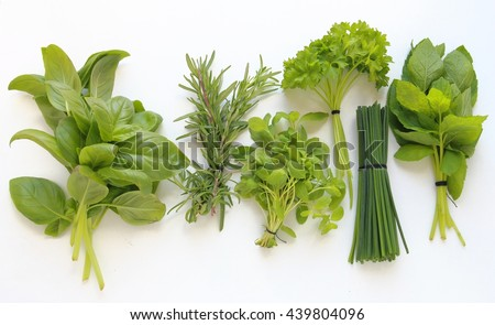Fresh herbs for cooking isolated on white background - stock photo