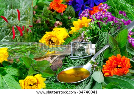 Fresh herbs for herbal medicine on a spoon - stock photo