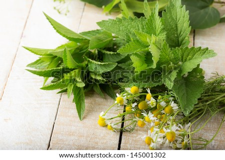 Fresh herbs for tea on wooden background. Fresh melissa, mint, camomile. Selective focus.