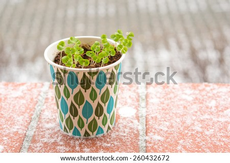 Fresh herbs in a paper cup standing outside on a cold winter day - stock photo