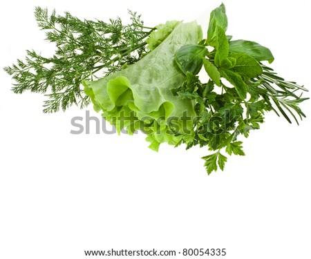 fresh herbs isolated - stock photo
