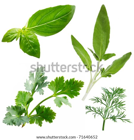 Fresh herbs isolated on white background - stock photo