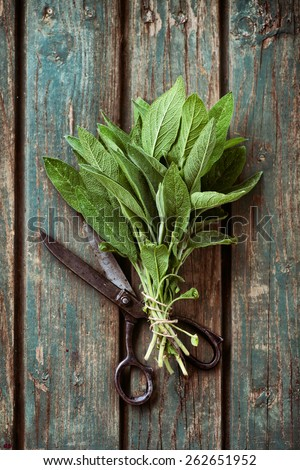 Fresh herbs. Saget in rustic setting. Garden herbs - stock photo
