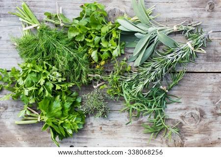 Fresh herbs: thyme, tarragon, sage, rosemary, parsley, mint, dill, coriander, celery, thyme - stock photo