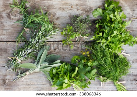 Fresh herbs: thyme, tarragon, sage, rosemary, parsley, mint, dill, coriander, celery, thyme - stock photo