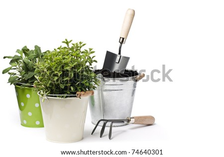 Fresh herbs with gardening tools isolated on white - stock photo