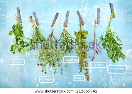 fresh herbs (with german designation) hanging on blue vintage wall - stock photo