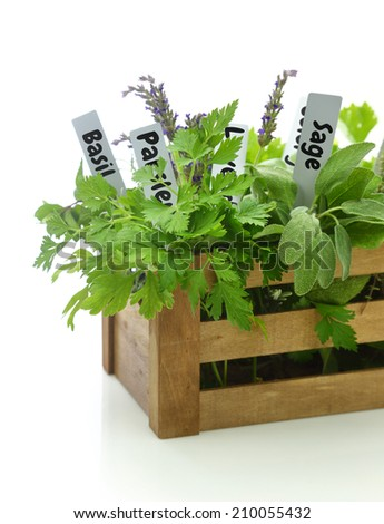 Fresh herbs with name tags in wooden box - stock photo