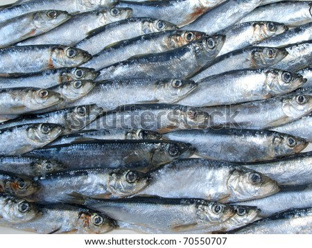 fresh herring fished out in White sea - stock photo