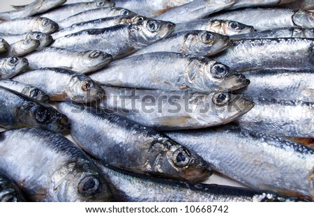 fresh herring fished out in White sea.Close-up - stock photo
