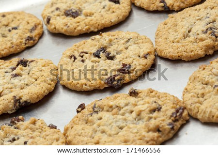 fresh homemade chocolate chip raisin cookies on baking sheet - stock photo