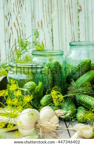 fresh homemade cucumbers for pickling or salting with dill horseradish garlic