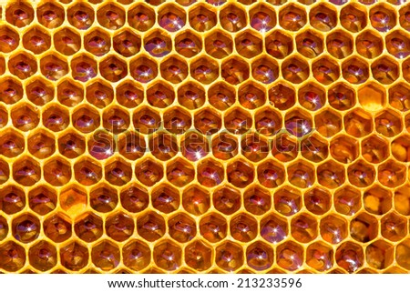 fresh honey in cells. Close up of honeycomb - stock photo