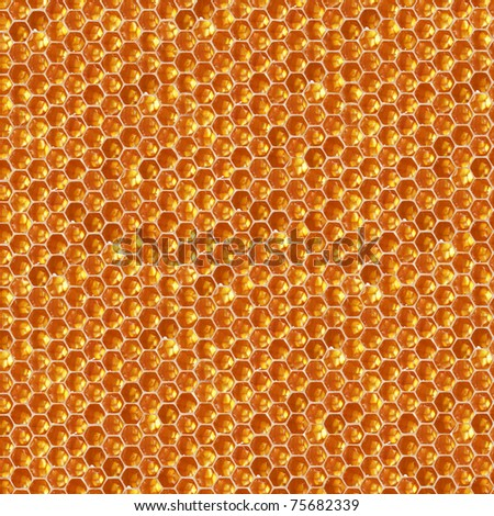 fresh honey in comb texture - stock photo