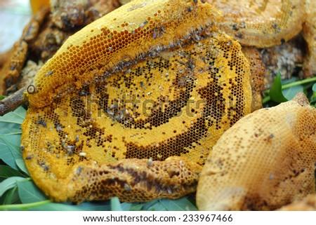 fresh honey in the comb - stock photo