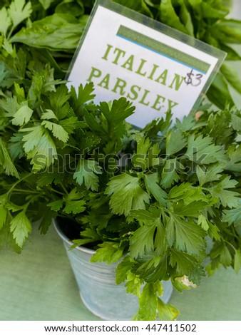 Fresh Italian Parsley for sale at farm market. - stock photo