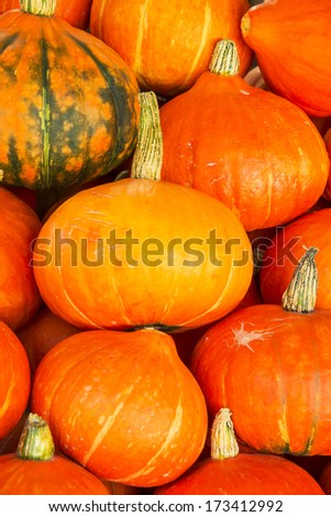 Fresh japanese pumpkin