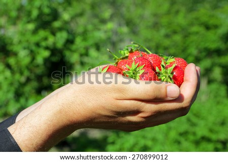 Fresh, juicy and healthy strawberries in the hands - stock photo