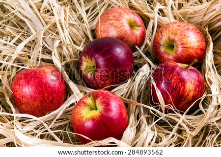 Fresh Juicy Rustic Red Apples on Straw. - stock photo
