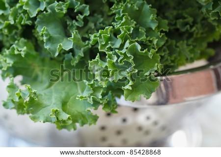 Fresh kale in strainer - stock photo